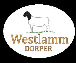 Westlamm Dorper